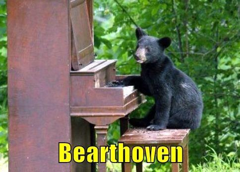 I've Bearly had any Lessions