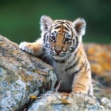 Tiger Cub Wins the Squee Spree!