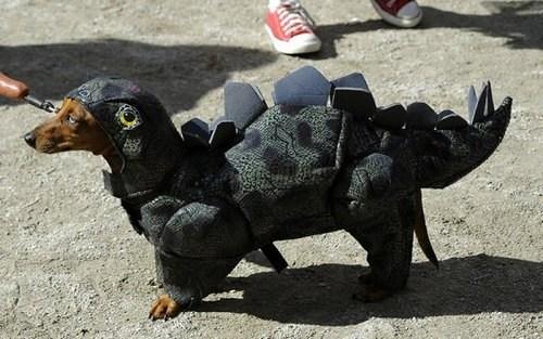 costume,pets,list,halloween,cute,dinosaurs,costumed critters