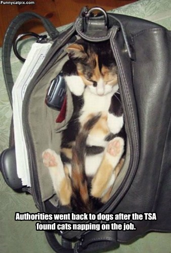 Authorities went back to dogs after the TSA found cats napping on the job.