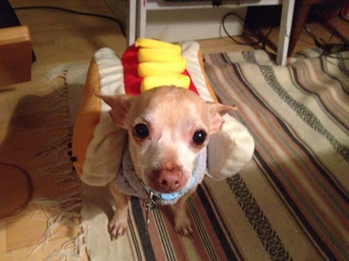 The Happy Hot Dog