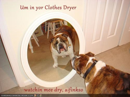 Um in yor Clothes Dryer                  watchin mee dry, aifinkso