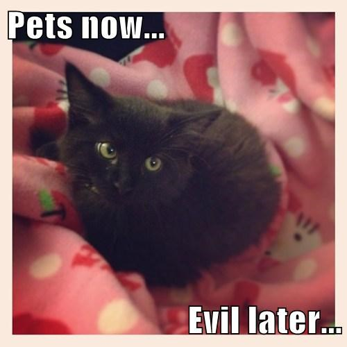 Pets now...  Evil later...