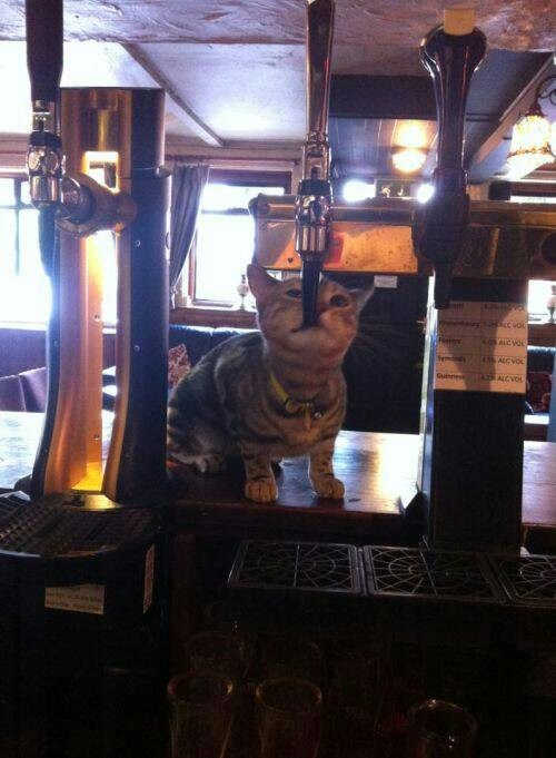 Crunk Critters: Gimme Beer!