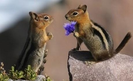 gift,cute,squirrels,flowers