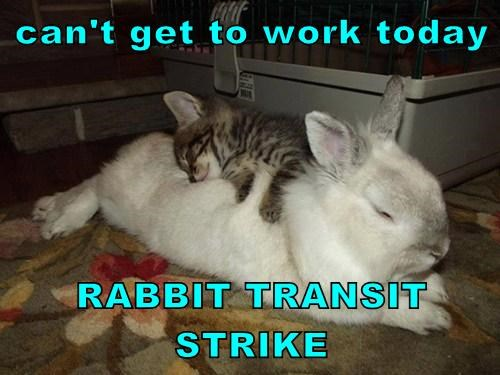 can't get to work today  RABBIT TRANSIT STRIKE