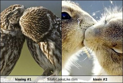 kissing #1 Totally Looks Like kissin #2