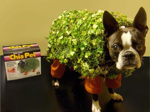 costume,dogs,chia pet,halloween,poorly dressed,g rated
