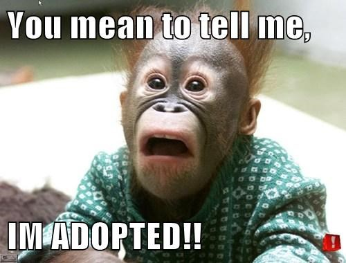 shock,surprise,adopted,apes