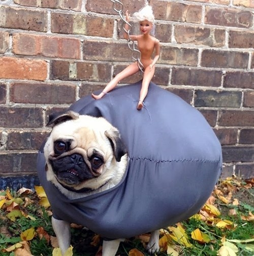 costume,dogs,Music,halloween,miley cyrus,wrecking ball