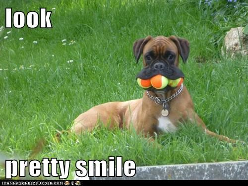 fetch,dogs,cute,tennis ball,smile