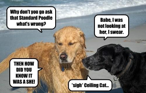 dogs,beach,flirt,ceiling cat
