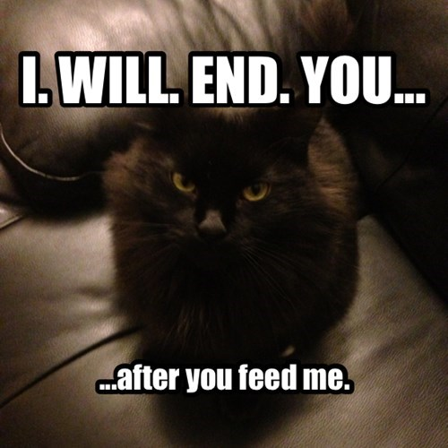 feed me,Cats,end you