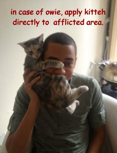 in case of owie, apply kitteh directly to  afflicted area.