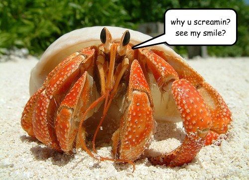 Crabs get a bad rap.