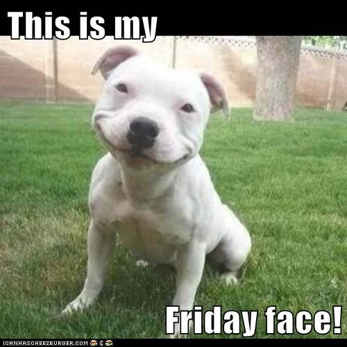 dogs,FRIDAY,happy,smile