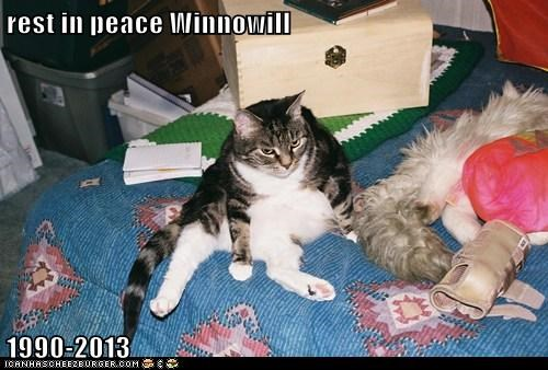 rest in peace Winnowill  1990-2013