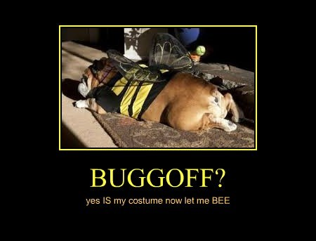 BUGGOFF?