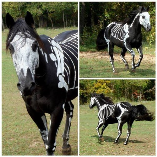 costume,halloween,spooky,body paint,horses,funny,g rated,win