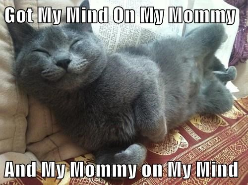 rap,mommy,parodies,Cats