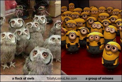a flock of owls Totally Looks Like a group of minons
