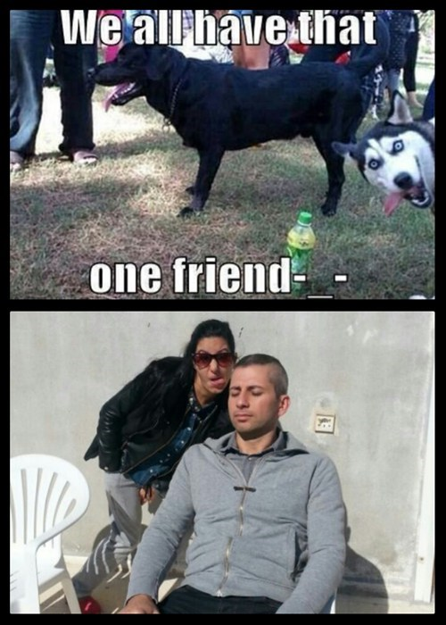 photobomb,dogs,friends,Memes