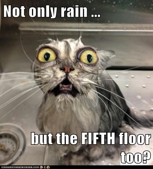 Not only rain ... but the FIFTH floor too?