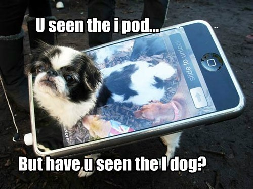 Feast Your Eyes on iDog!