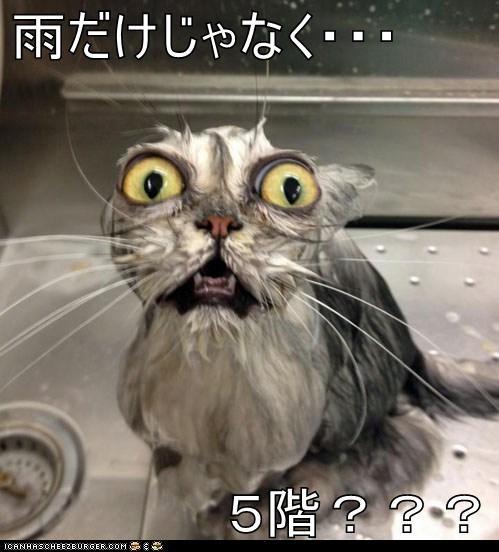 雨だけじゃなく・・・ 5階???