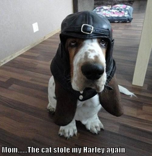 Mom......The cat stole my Harley again