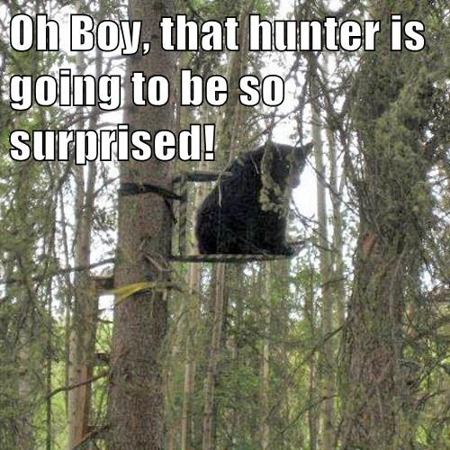 bears,surprise,hunter