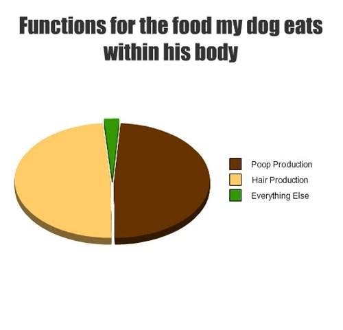 food,dogs,Pie Chart,poop