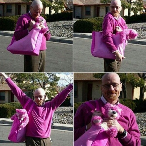 Now He's Walter Pink