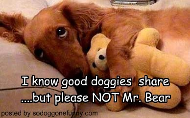 I know good doggies  share ....but please NOT Mr. Bear