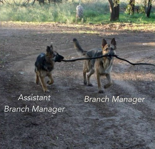 dogs,manager,work,puns