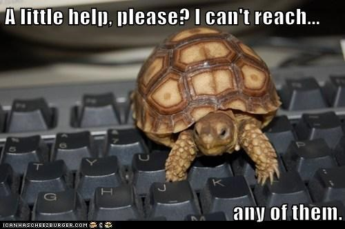 This Tortoise Needs a Typing Tutor
