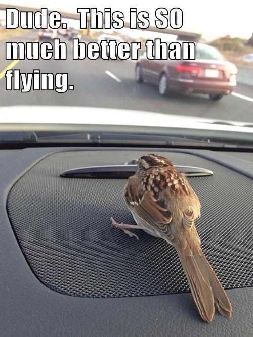 birds,cars,cute,flying