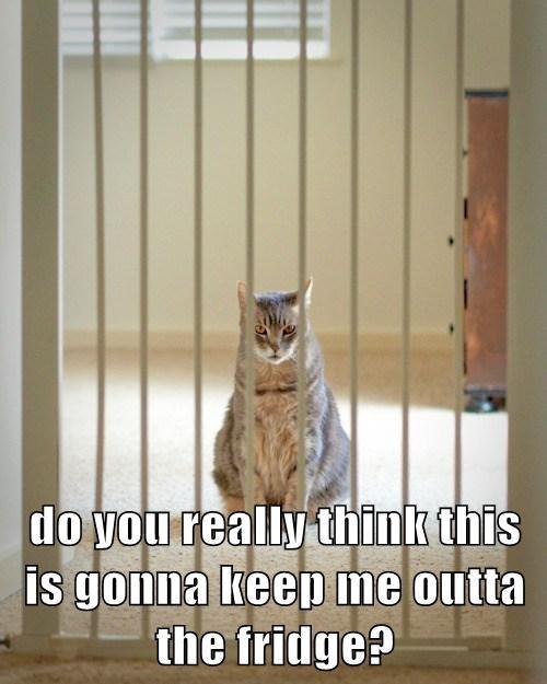 escape,fridge,Cats