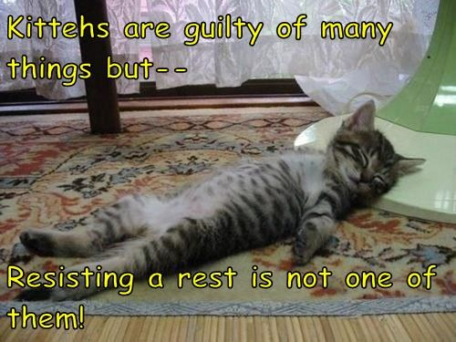 Kittehs are guilty of many things but--  Resisting a rest is not one of them!