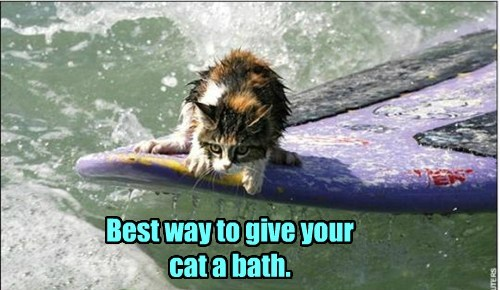 Best way to give your cat a bath.