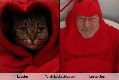 Lobster Totally Looks Like Loster Joe