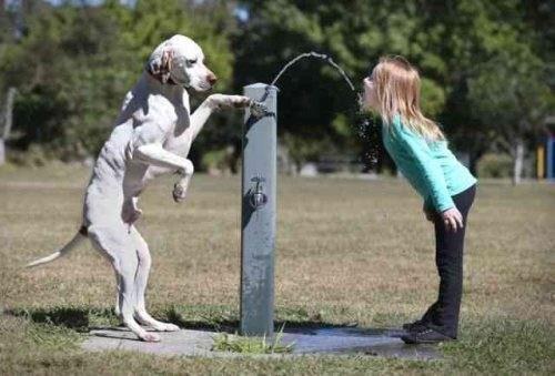 water fountain,dogs,friends,teamwork