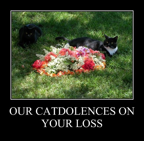 OUR CATDOLENCES ON YOUR LOSS