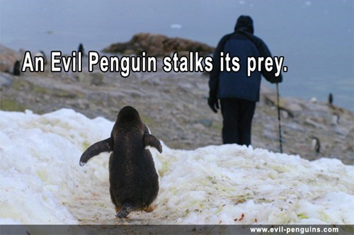 All Evil Penguins Hunt Humans