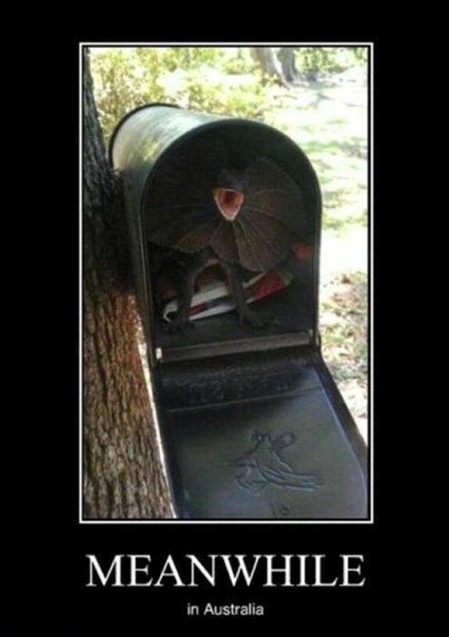 lizards,scary,australia,mail