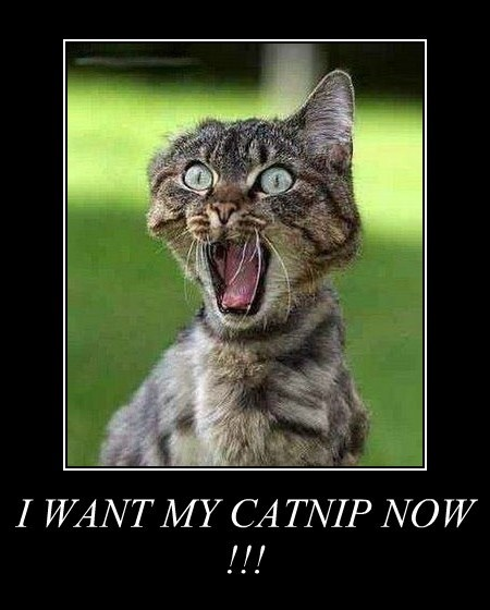 I WANT MY CATNIP NOW !!!