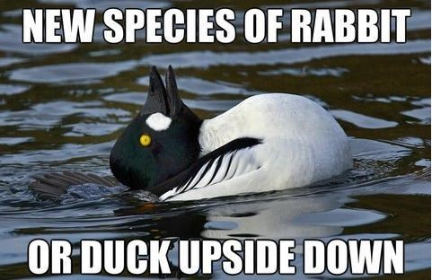 ducks,illusion,animals,rabbits