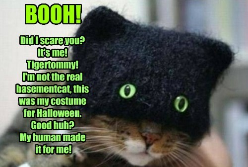 BOOH!  Did I scare you? It's me!  Tigertommy! I'm not the real basementcat, this  was my costume  for Halloween. Good huh? My human made  it for me!