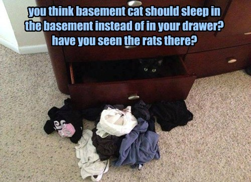 you think basement cat should sleep in  the basement instead of in your drawer? have you seen the rats there?