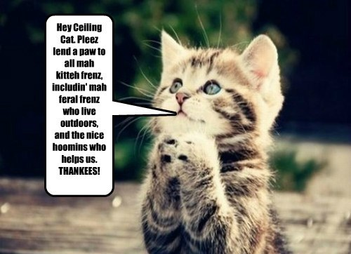 Hey Ceiling Cat. Pleez lend a paw to all mah kitteh frenz, includin' mah feral frenz who live outdoors, and the nice hoomins who helps us. THANKEES!